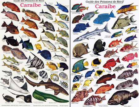 Florida Keys Reef Fish Identification http://www.spearfishingworld.com/reef-fish-of-the-caribbean-id-card-french.html
