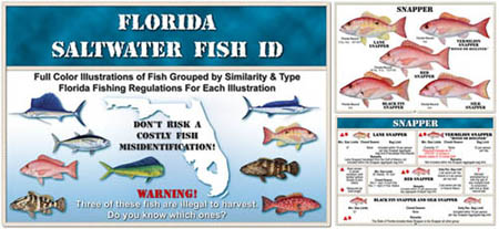 Salt water fish id book for Florida saltwater fish species