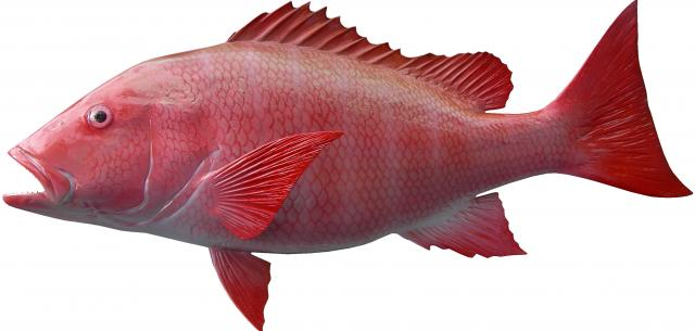 Red snapper fish mount for Red snapper fish